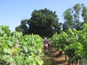 visite guidée vigne classée Sarragachies vin saint-mont Gers