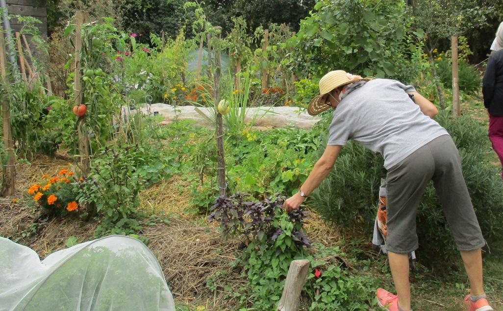 jardin permaculture Simorre